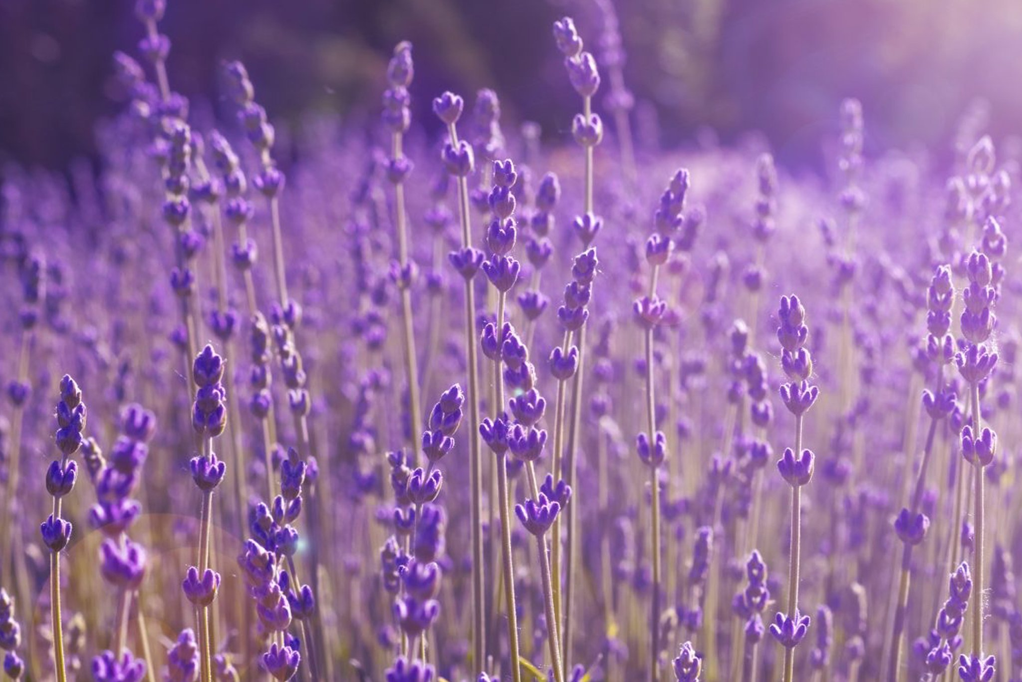 Aromatherapy Oils Product List